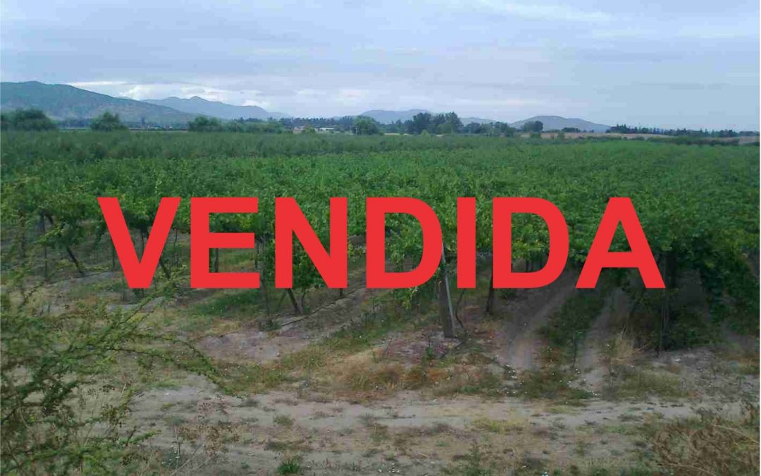 Parcela agrícola con producción