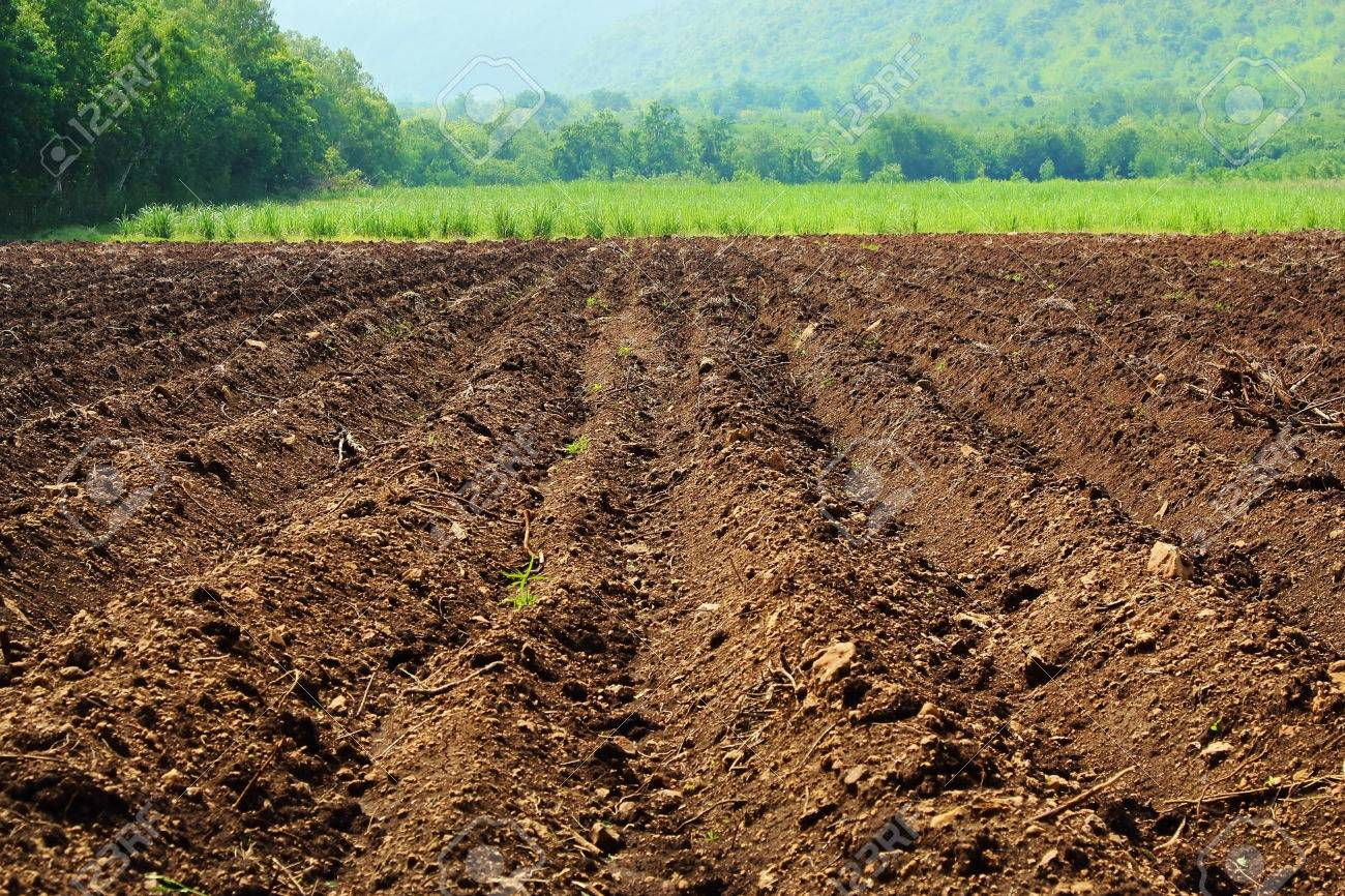 Parcelas agrícolas